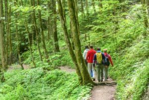 groupe de randonneurs sur un sentier forestier
